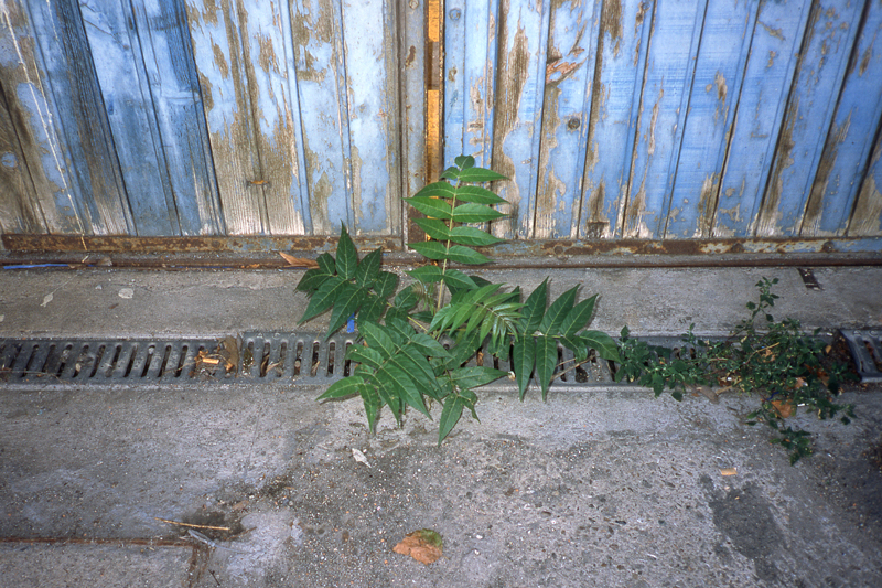 beton-vs-vegetation-1