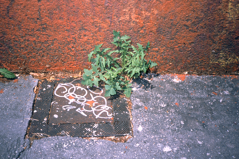 beton-vs-vegetation-5