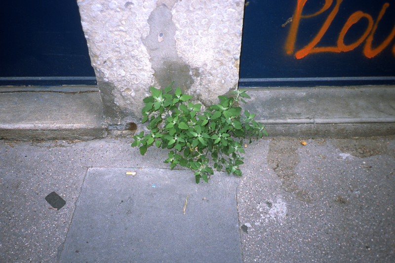 beton-vs-vegetation-7
